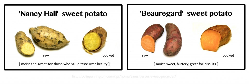 Labels for sweet potatoes