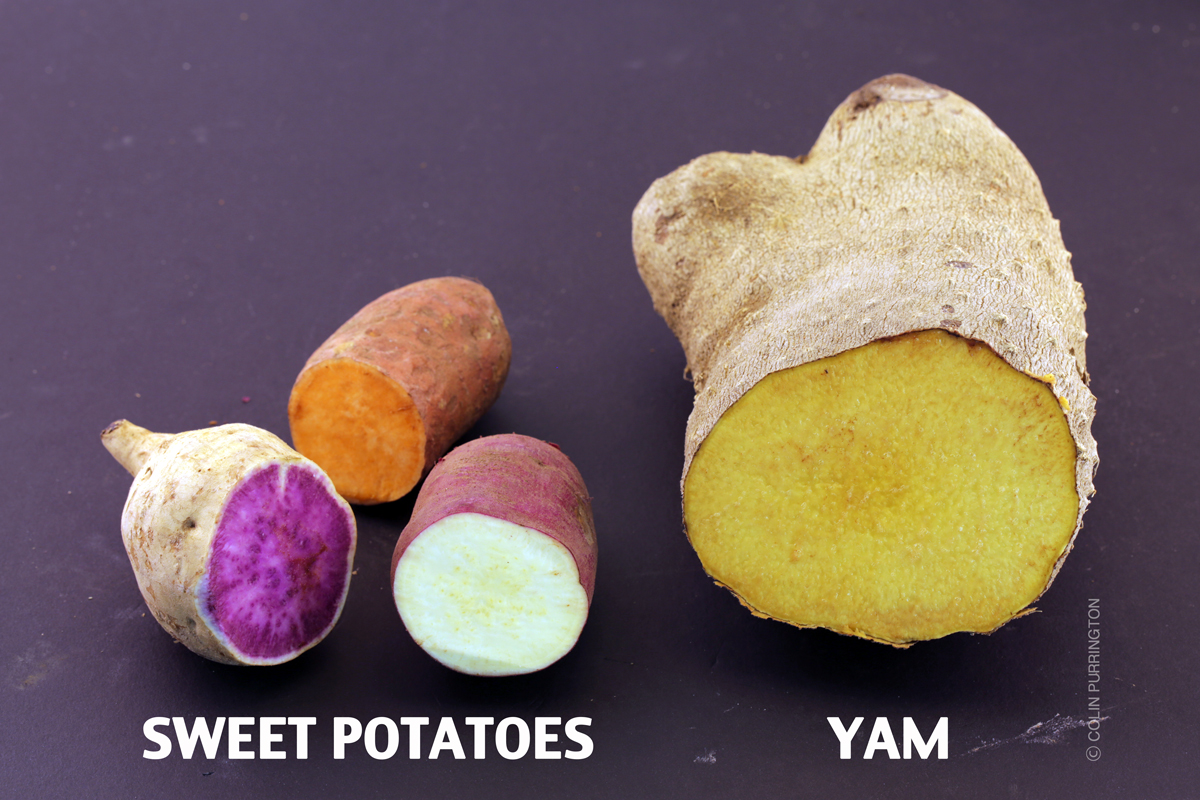 difference between sweet potatoes and yams yams versus sweet potatoes colin purrington 12952