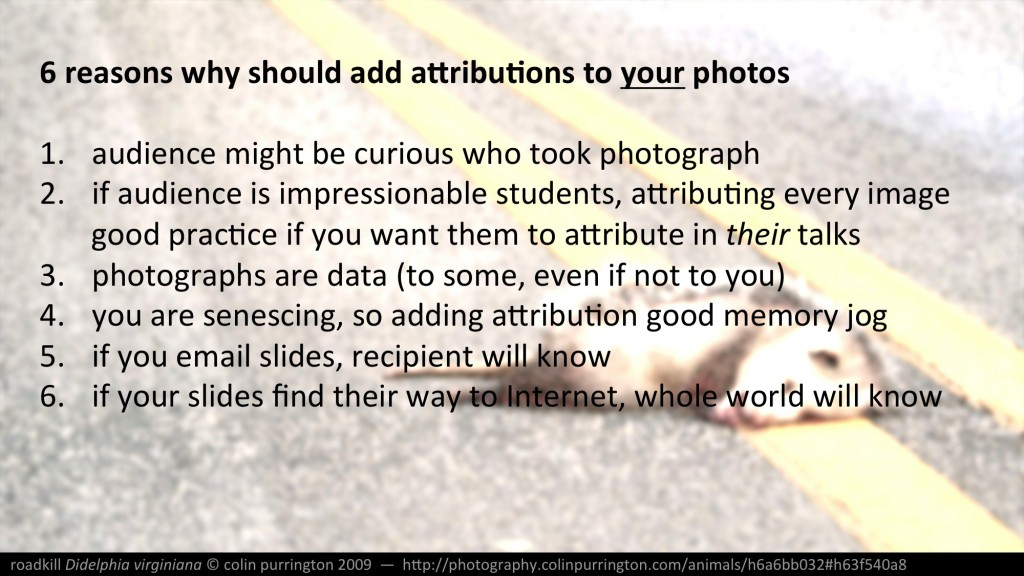 image-attribution-in-powerpoint