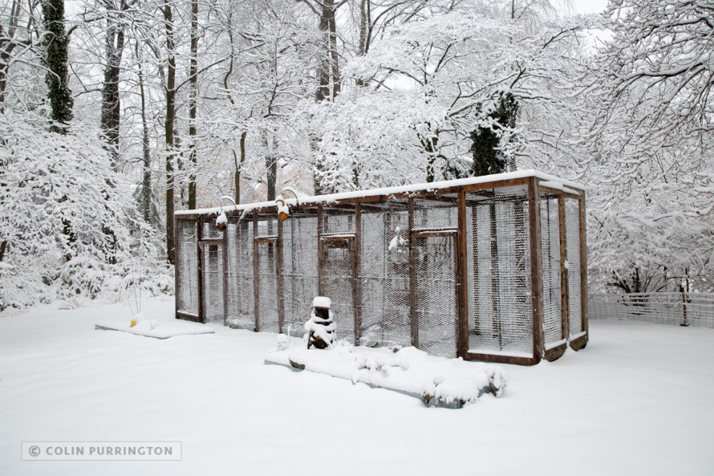 Squirrel proof garden in snow