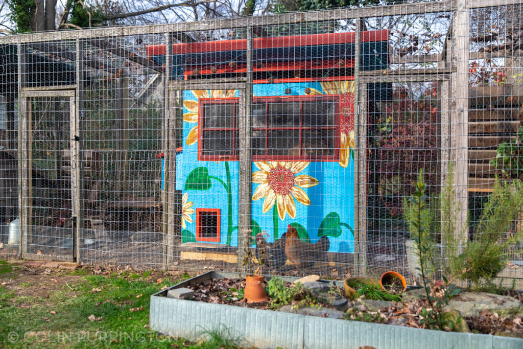 Sunflower-themed chicken coop built from scrap lumber