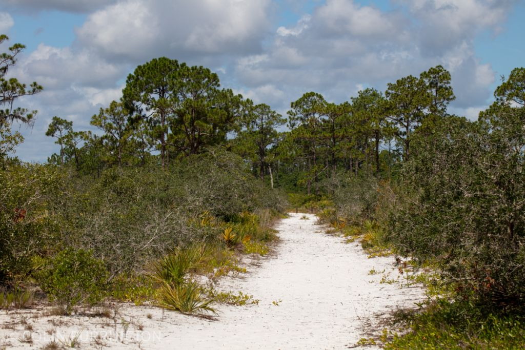 Sandy trail in scrub area of Highlands Hammock State Park. Sebring, FL